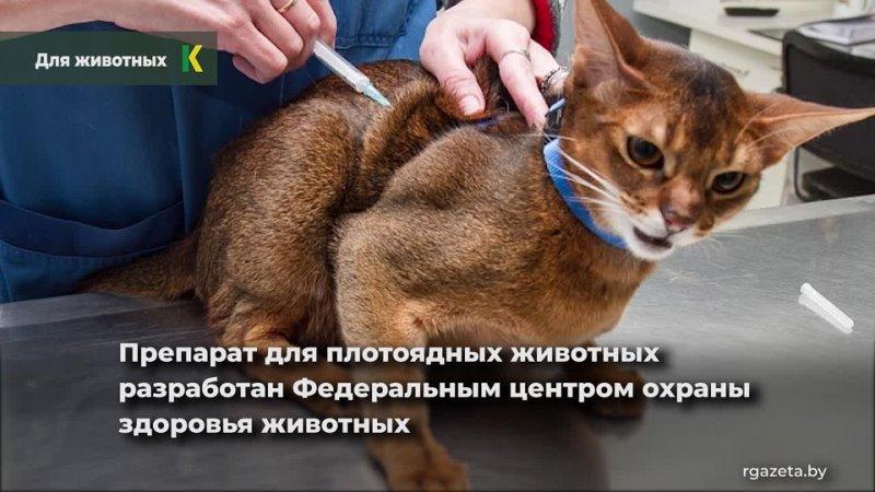 Первую в мире вакцину от коронавируса для животных зарегистрировали в России