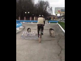 Велособаковод  с тройкой удалых хаски в упряжи катит по Ростову -  - это Ростов-на-Дону!