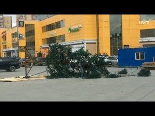 В апреле месяце в Тюмени на парковке около «Фаворита» упала новогодняя ёлка.
