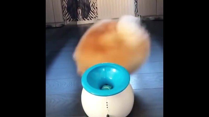 Большое счастье для маленькой собаки