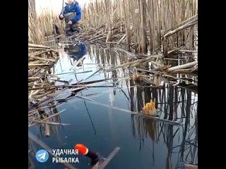 Ловля карася в камышеУдачная рыбалка 🎣 | Всё о рыбалке
