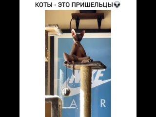 НОВЫЙ УРОВЕНЬ МОЕЙ ШИЗОФРЕНИИ.