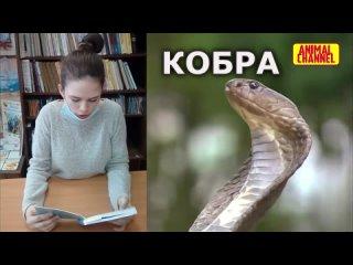 Кобра - одна из самых сильных и опасных змей. Это факт!