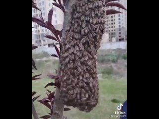 Ну действительно! Почему бы и не потрогать пчел голыми руками, они ведь не укусят.