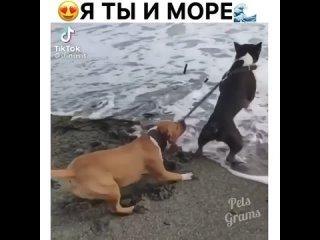 Когда хочется к друзьям, а жена против😃