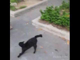 Материнский инстинкт у кошки