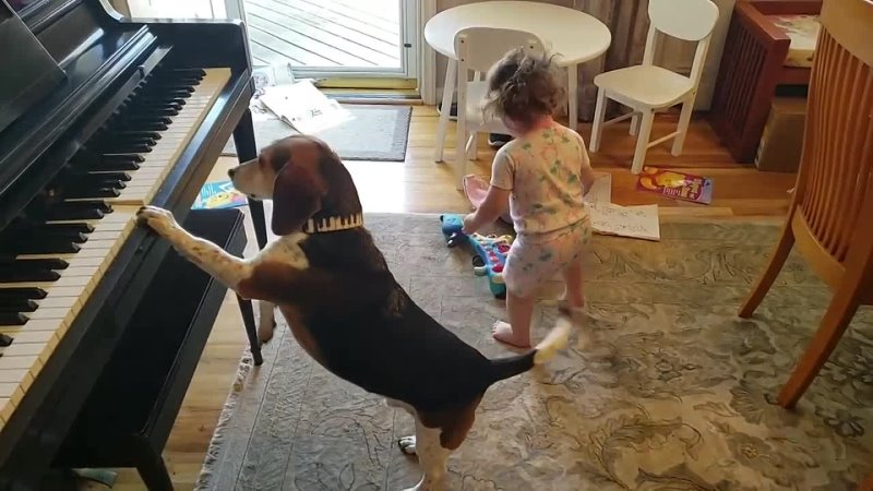 THE MOST AMAZING AND HYSTERICAL VIDEO ON THE INTERNET Feat Buddy Mercury Dog and Lil Sis 720 X 1280