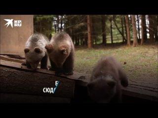 Детский приют для осиротевших медвежат