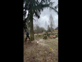 Спил дерево с оттяжкой
