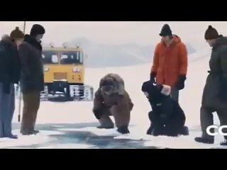ВИДЕО ДОЛБОЁБА (538)