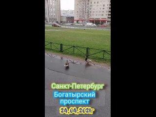 Уточки в Санкт-Петербурге. 🦆🦆