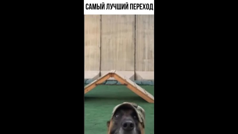 Как одеть кепку собаке