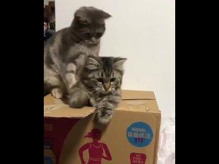 Сиди в коробке...ты наказан)