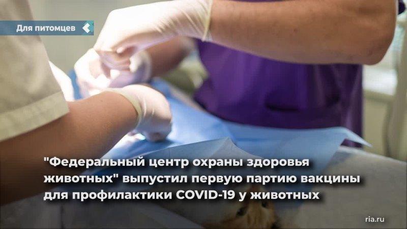 В России выпустили первую партию вакцины от коронавируса для питомцев