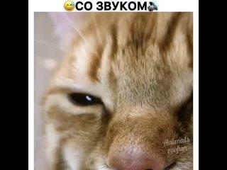 Когда понимаешь, что кот завёл себе человека 😂