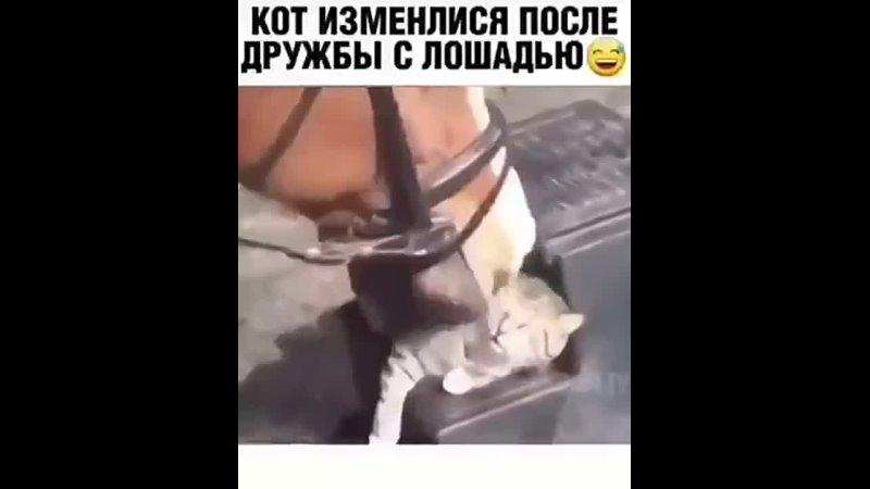 Кот подражает.mp4