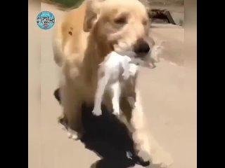 Учитесь люди у собак.. Добрее нет и преданней созданья. (720p).mp4