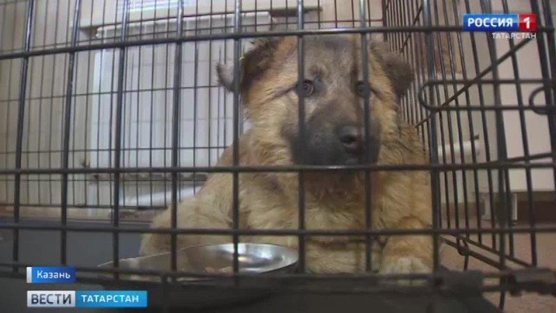 В Казани спасли собаку которую пытались убить из арбалета