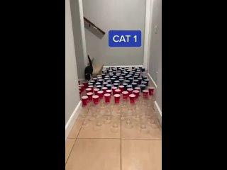 Три вида котов...