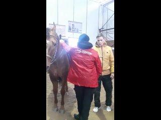 первое близкое общение с конем волонтерского отряда