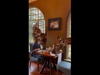 Наслаждайтесь приятным утром с прекрасными жирафами в Найроби. 🦒