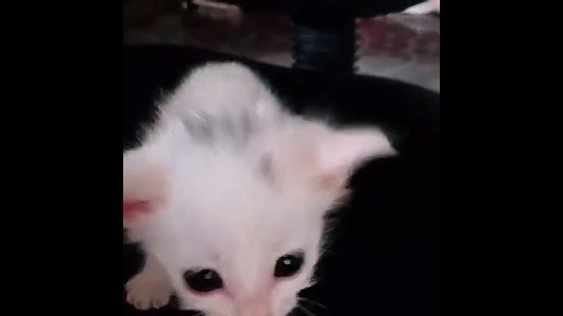 Котенок Гав 😊