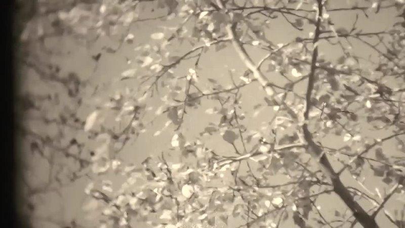 Кинохроника Незабываемая встреча снятая в Рязани в 1965 году