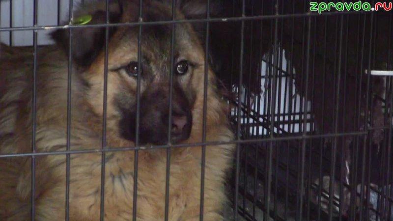 Пса по кличке Стрелка которого ранили из арбалета планирует забрать из приюта семья из Васильево