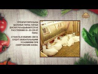 Экологическое козоводство _Как правильно купировать рога _ Воспитание козлят _ Ч