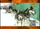 Новости 24 РЕН ТВ Камчатка, 27.02.2013