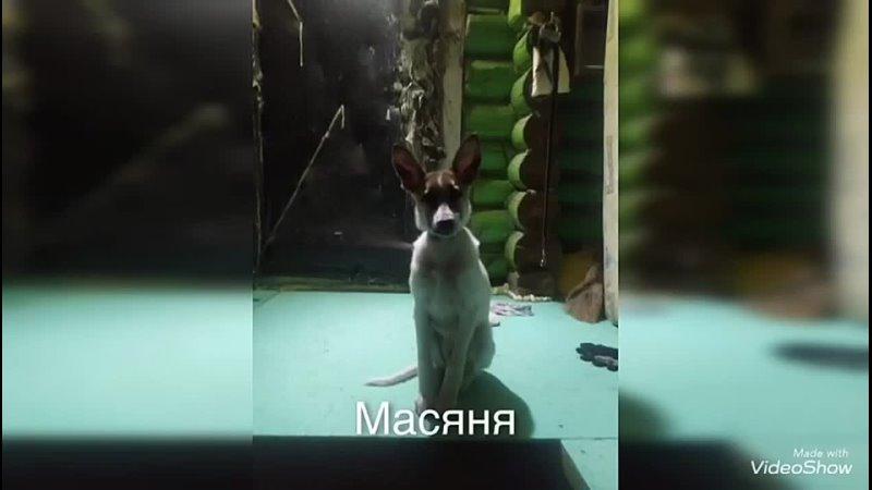 Видео от Белопёс Территория добра