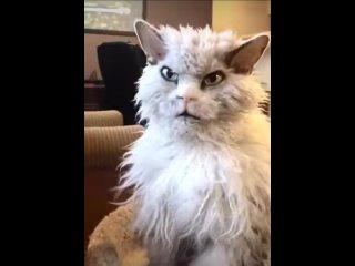 Когда кот вернулся с кладбища домашних животных