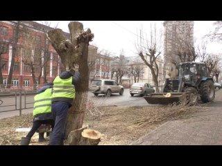 Санитарная обрезка и спил аварийных деревьев