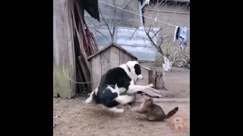 Дала просраться блохастому)