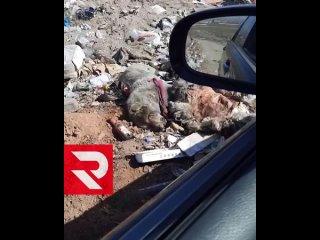 Вот такая стихийная свалка с трупами животных в районе Сукпака
