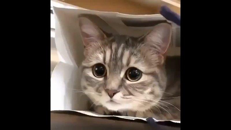 Вы только посмотрите на эти глазки