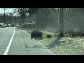 Микро-блог ценителя истории Когда у медведицы 4 непоседы медвежонка и автодорога.mp4