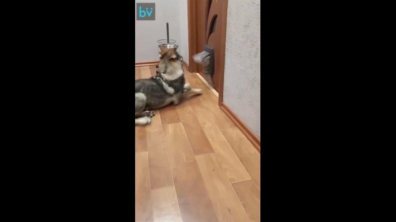 Кот как чёрт из табакерки