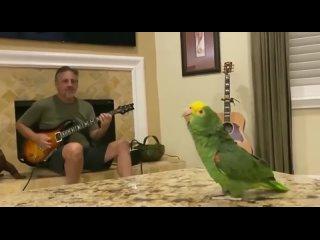 Джек Блэк или попугай