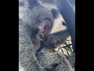 что может быть лучше.чем прикормить милую коалу
