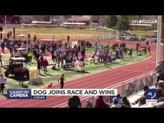 пес выбежал на дорожку во время соревнований