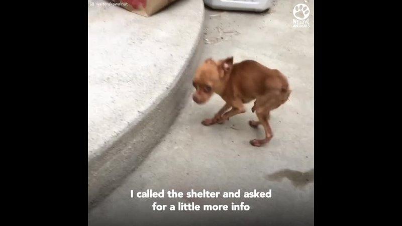 эта женщина находит бездомных собак с редкой болезнью и дает им лучший дом