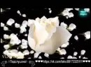 Букет из белых роз. band odessa. ремикс