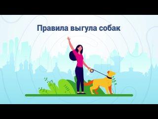 Правила выгула собак: за что могут оштрафовать