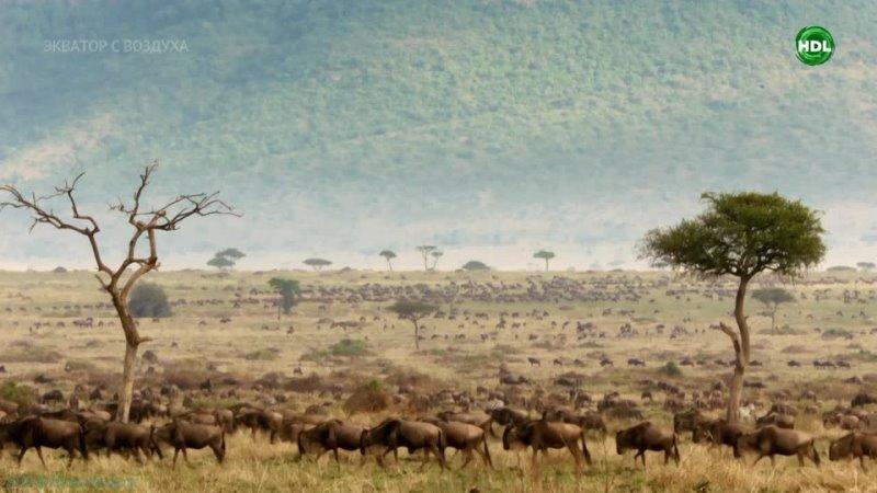 BBC Экватор с воздуха 1 Африка Познавательный природа путешествие 2019