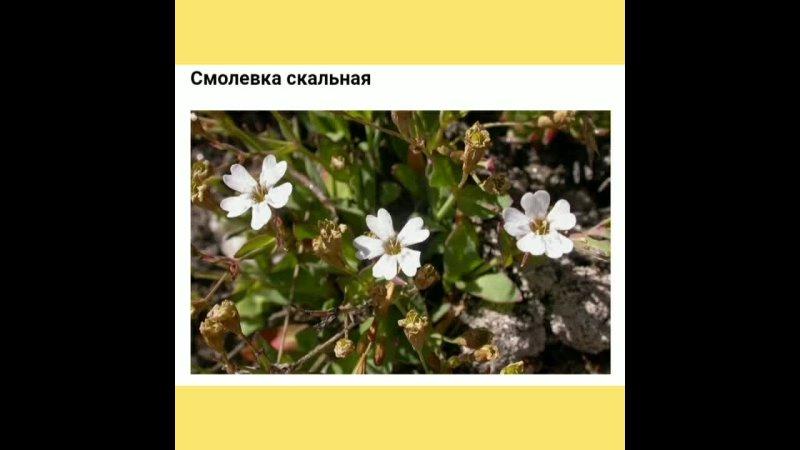 МДОУ№111 Первая младшая группа Теремок