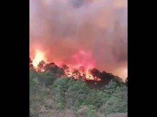 Лесной пожар в Лагуна де Санчес (Мексика, Нуэво-Леон, 25 марта 2021).