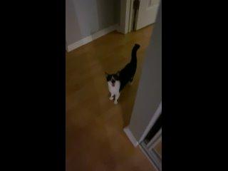 Мой застенчивый котенок впервые пытается мяукнуть в поисках еды...ждите этого.