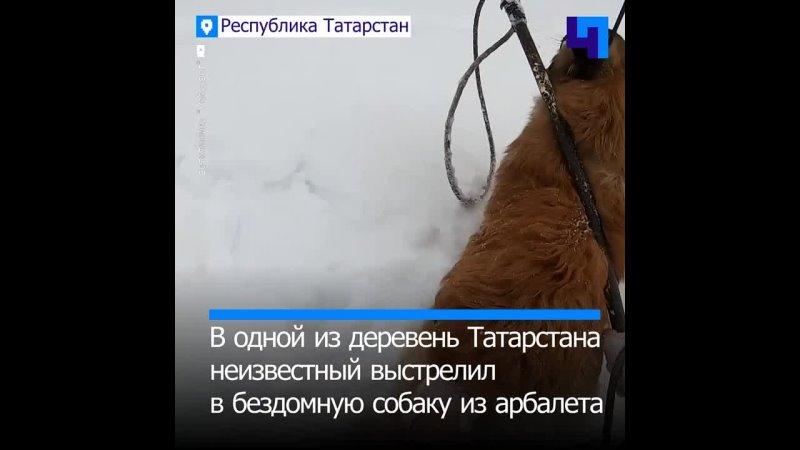 Чудом выжил в Татарстане кто то выстрелил из арбалета в бездомную собаку