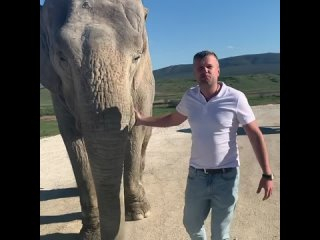Сегодня был приглашён на выпуск слонов в Новый вольер. Зрелище грандиозное, Животные удиви.mp4